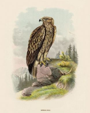 Eagle, Imperial 1 by O V Riesenthal